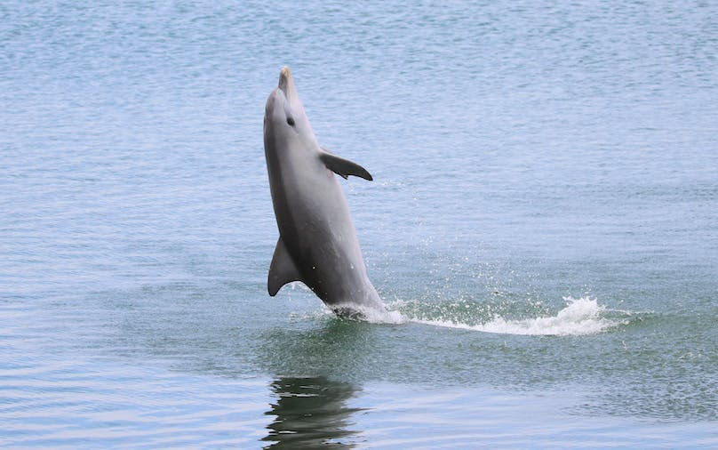 Dolphin Sanctuary Eco Tour