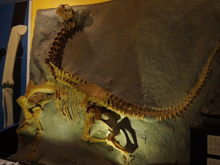 National Dinosaur Museum Canberra