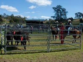 Gresford Team Penning and Arena Sorting