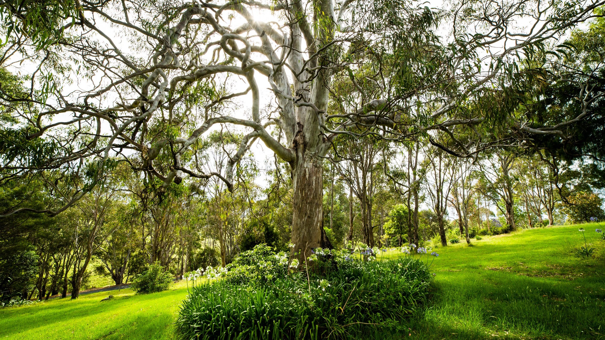 Stroll among stately gums, fruit trees, colourful gardens