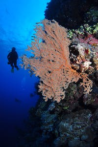 Bougainville Reef Dive Site