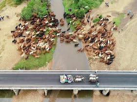 Eidsvold Cattle Drive Cover Image