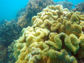 Some of the coral from the fringing reefs around Shute Harbour, Airlie Beach