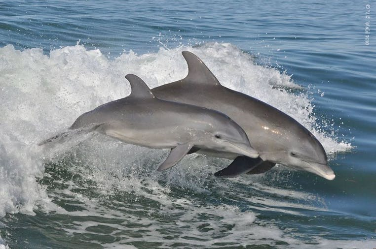 2 Hour Adventure Dolphin Tour