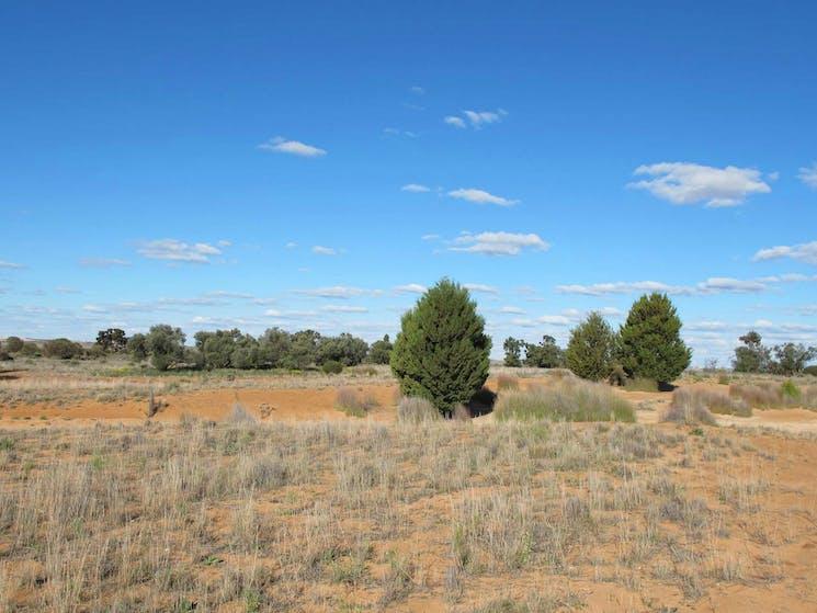 Zanci Pastoral loop, Mungo National Park. Photo: Wendy Hills/NSW Government