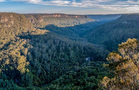 Missingham lookout track, Budderoo National Park. Photo: Michael Van Ewijk