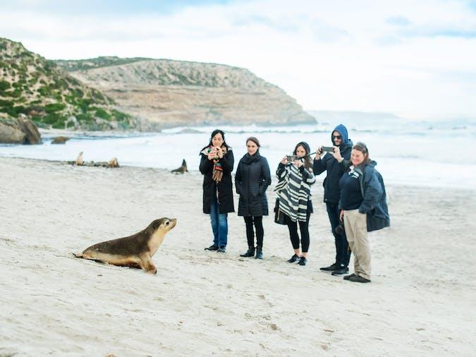 1 Day Kangaroo Island Wildlife Discovery Tour