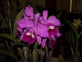 Casino Spring Orchid Show