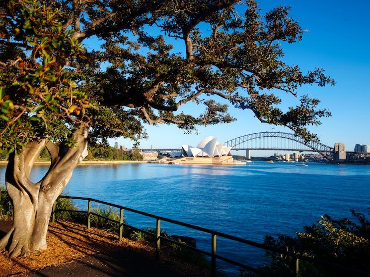 Mrs Macquaries Point- Royal Botanic Garden Sydney