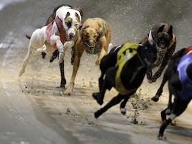 Twilight Greyhound Racing