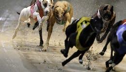 Image of the event 'Twilight Greyhound Racing'