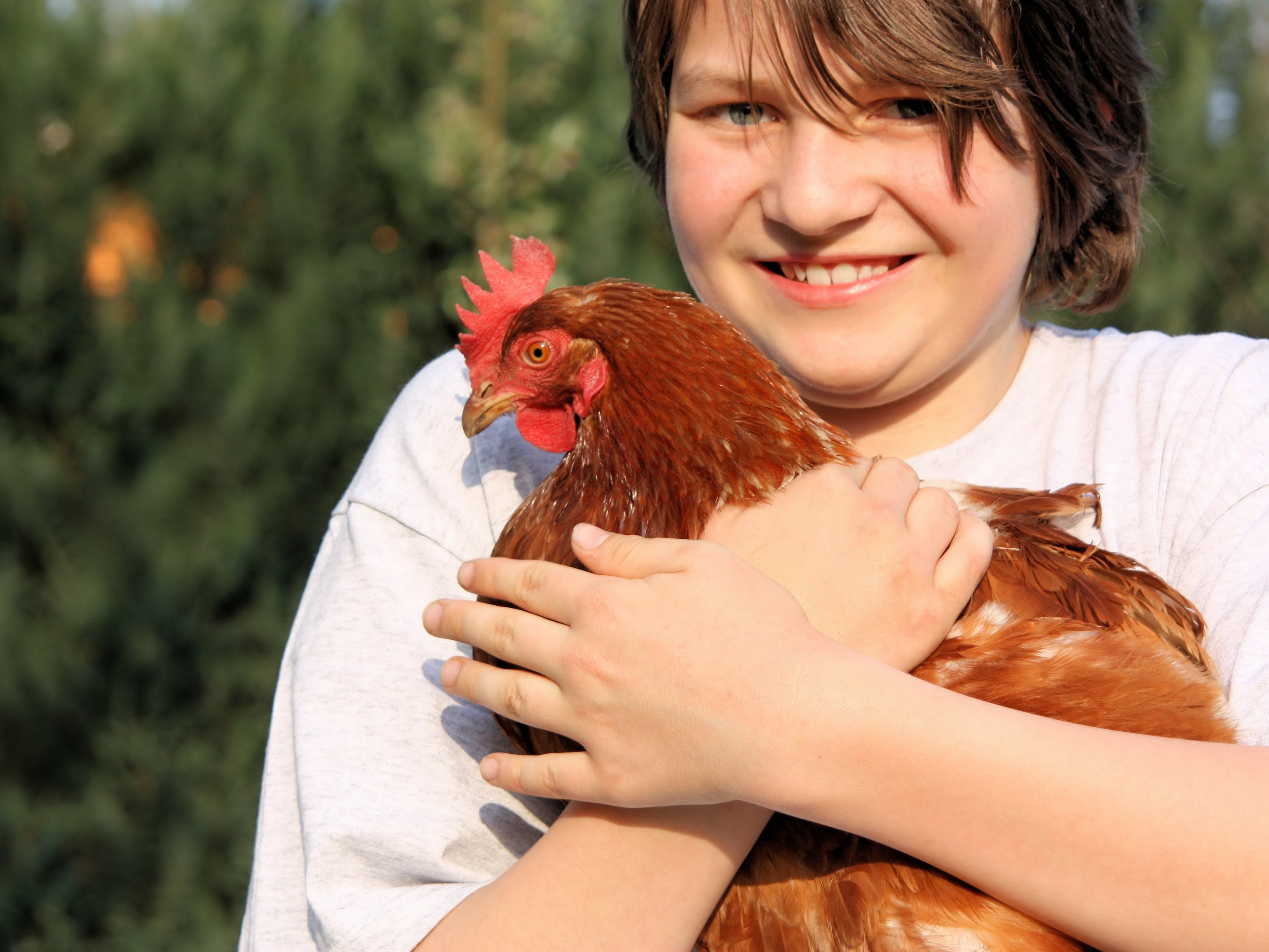 Ben meets the hens while staying at Morvern Valley Farm