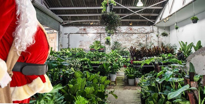 Image of the event 'Sydney Huge Indoor Plant Warehouse Sale: Christmas in July'