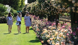 Image of the event 'Griffith Spring Fest - Garden Festival'
