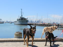 Dogs and Williamstown Foreshore