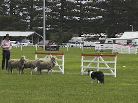 Port Fairy Working Sheepdog Trials