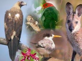 Birdrangers