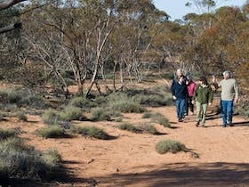 Mallee Stop walking track