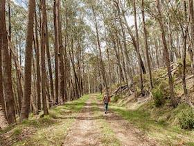 Patons Hut walking track