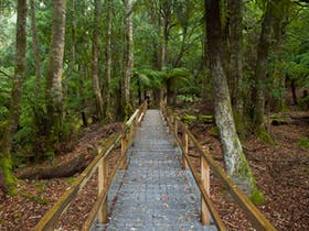 Penance Grove walking track
