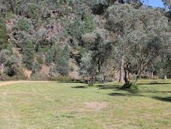 Terrara Creek campground and picnic area, Nangar National Park. Photo: K Edwards/NSW Government