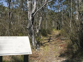 Warrigal walking track